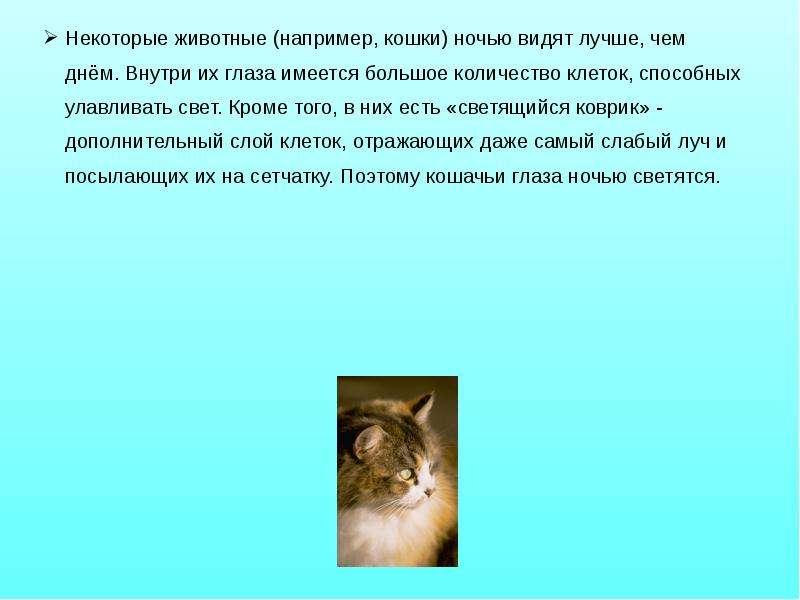 Некоторые животные (например, кошки) ночью видят лучше, чем днём. Внутри их глаза имеется большое ко