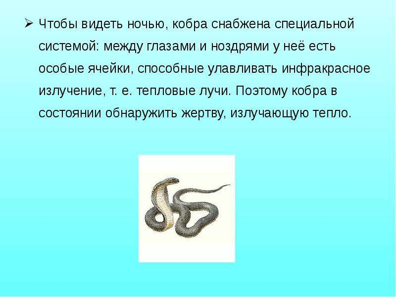 Чтобы видеть ночью, кобра снабжена специальной системой: между глазами и ноздрями у неё есть особые