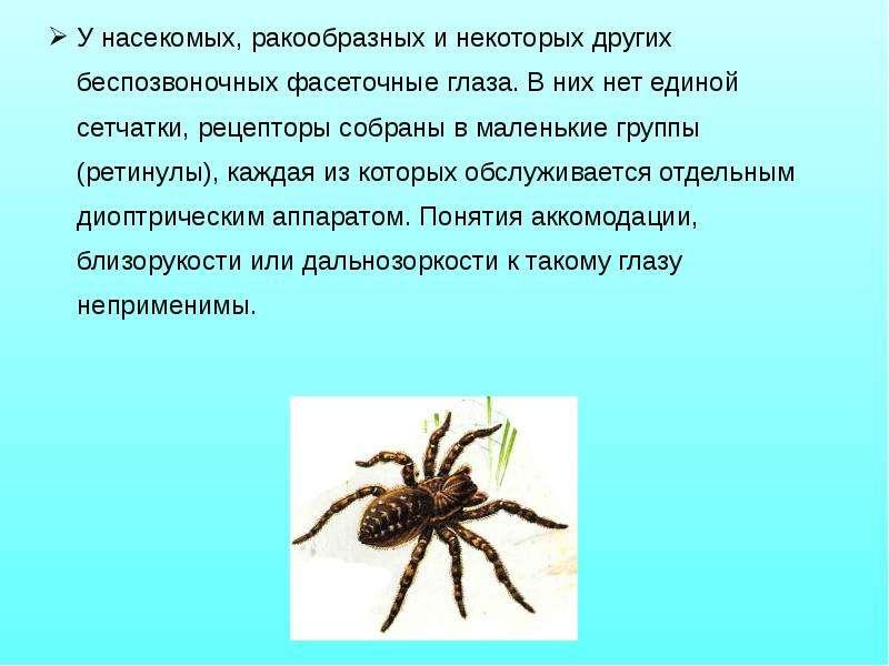 У насекомых, ракообразных и некоторых других беспозвоночных фасеточные глаза. В них нет единой сетча