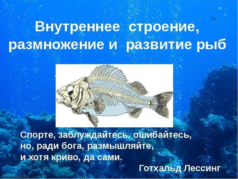 Презентация По биологии Внутреннее строение, размножение и развитие рыб