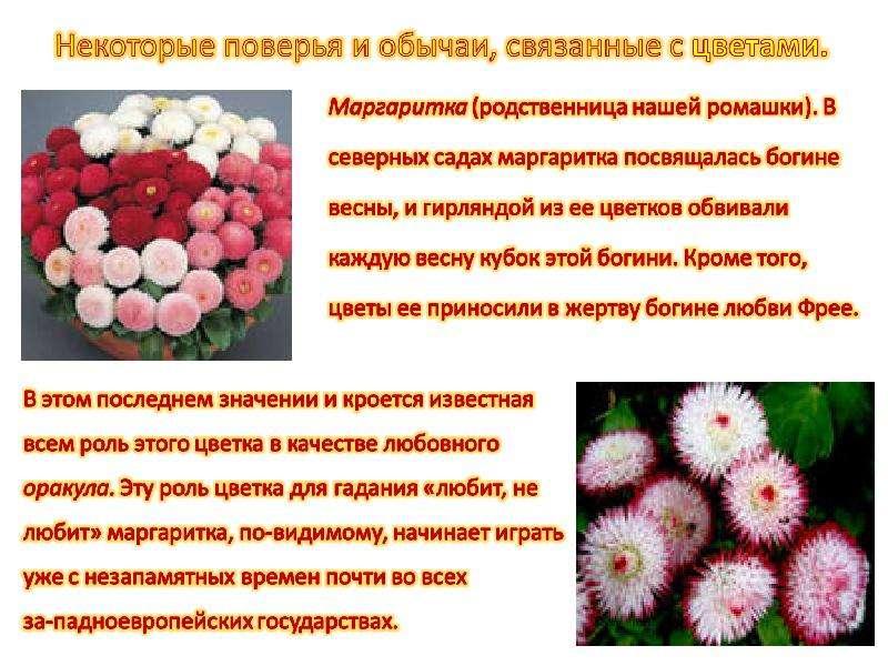Стихи связанные с цветами