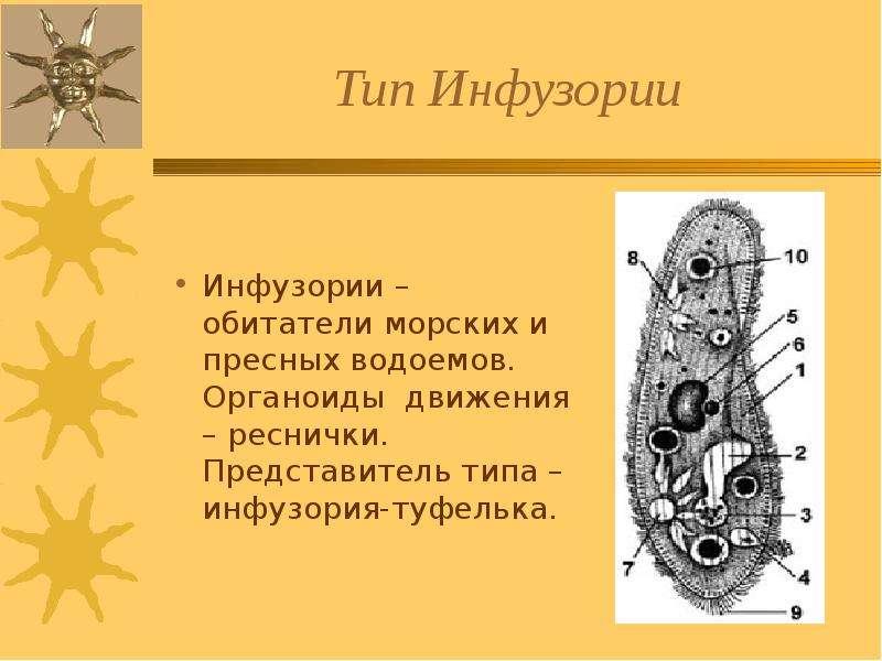 dlya-yuristov-urok-tip-prosteyshie-prezentatsiya-po-biologii-7-klass-rabochaya-tetrad