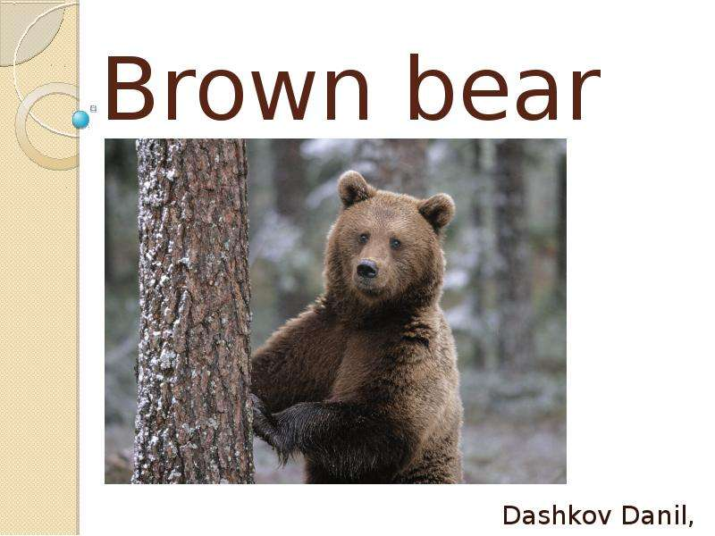 Brown bear Dashkov Danil, 3a