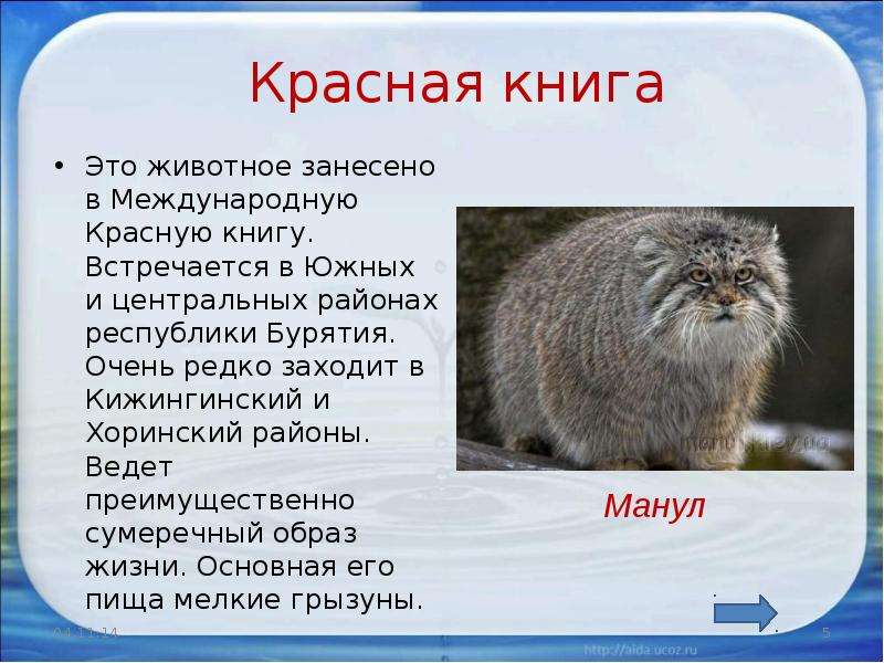 Фото гандболисток сборной россии