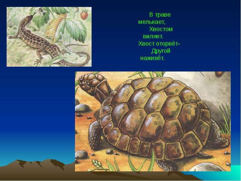На тему Животные пустыни., слайд 13
