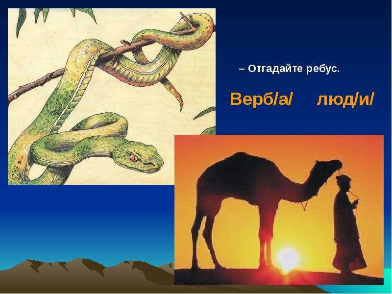 На тему Животные пустыни., слайд 14