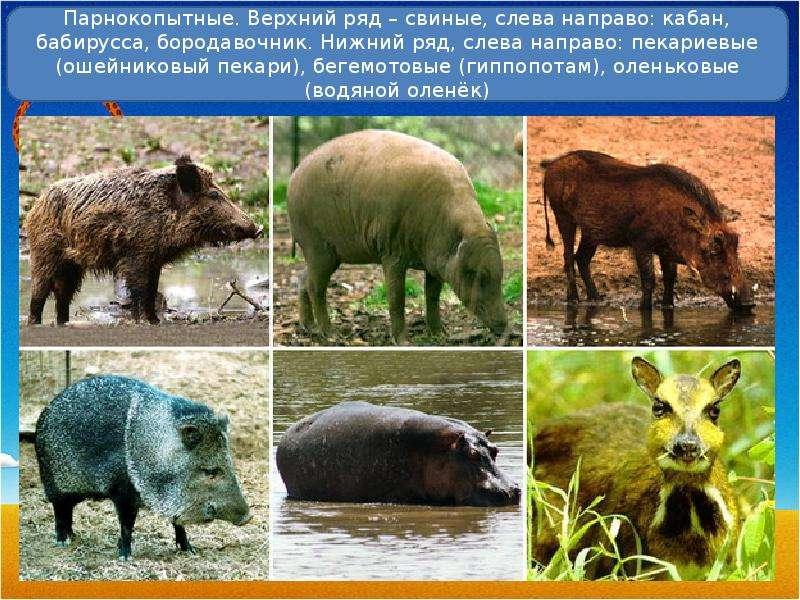 novostnaya-poiskovaya-sistema-porno-onlayn