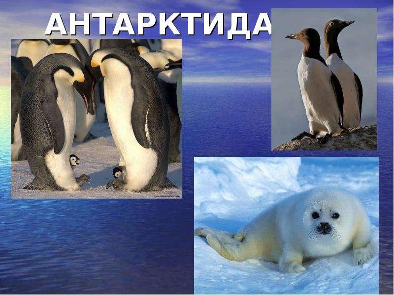 Скачать видео обитатели антарктиды фото 496-526
