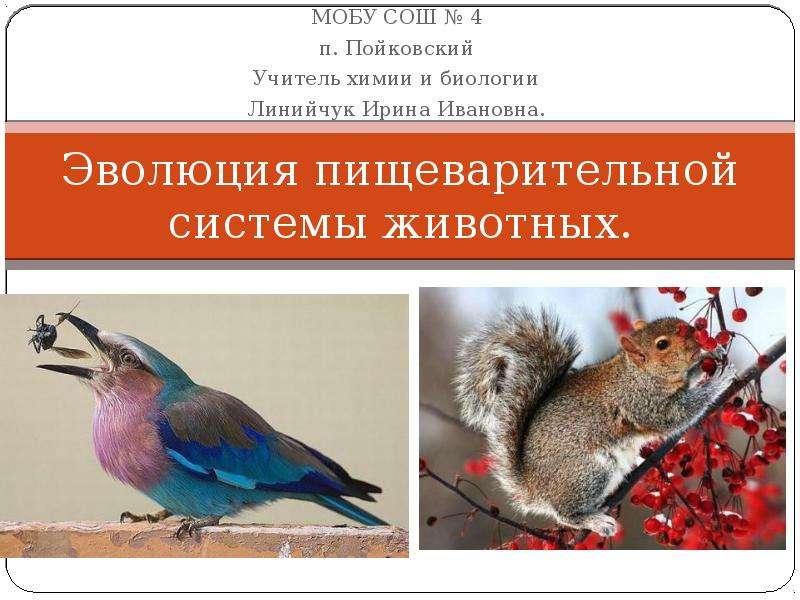 Презентация На тему Эволюция пищеварительной системы животных