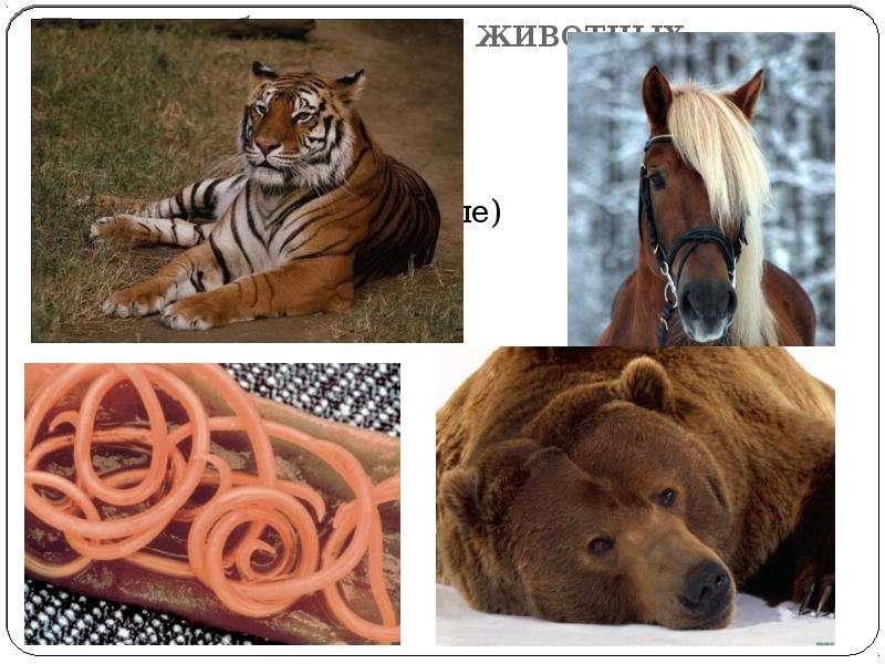 По способу питания животных делят на: Травоядные Хищные (плотоядные) Всеядные Паразиты.