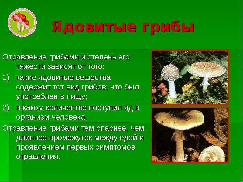 Ядовитые растения и названия в беларуси