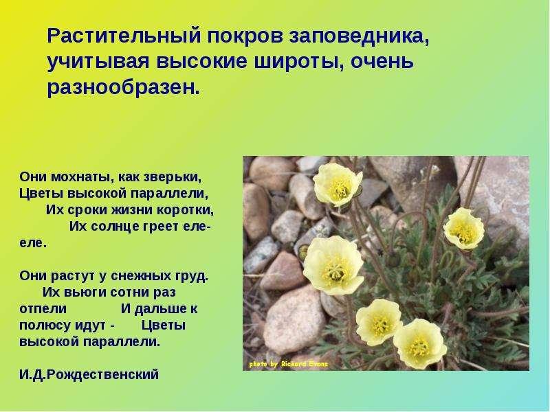 ftiziatrii-taymirskiy-zapovednik-prezentatsiya-skachat