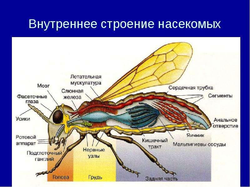 святого анатомия и физиология насекомых получиться меня самый