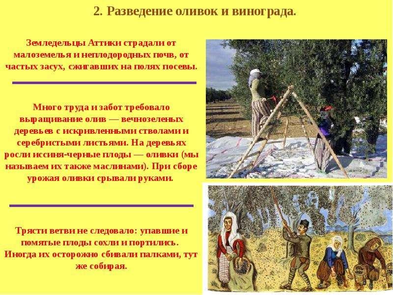 Презентация на тему земледельцы аттики теряют землю
