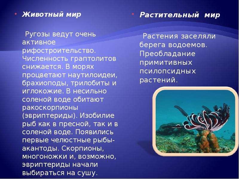 Животный мир Животный мир Ругозы ведут очень активное рифостроительство. Численность граптолитов сни