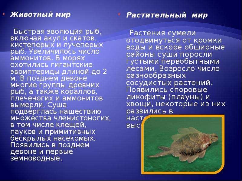 Животный мир Животный мир Быстрая эволюция рыб, включая акул и скатов, кистеперых и лучеперых рыб. У