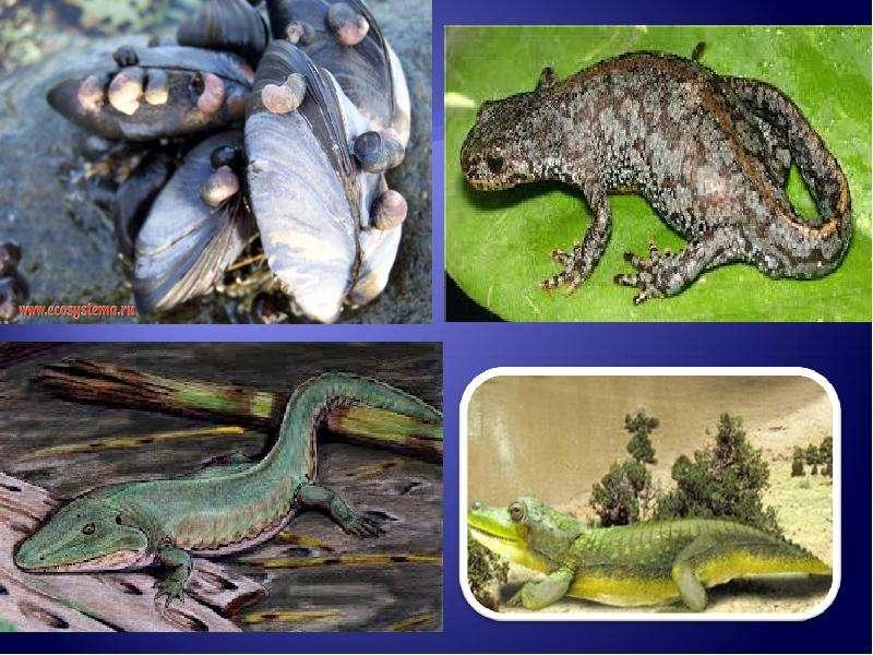 Развитие жизни на Земле: палеозой, слайд 21