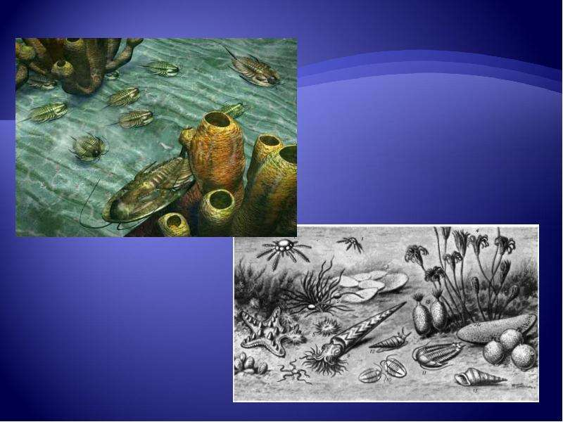 Развитие жизни на Земле: палеозой, слайд 7