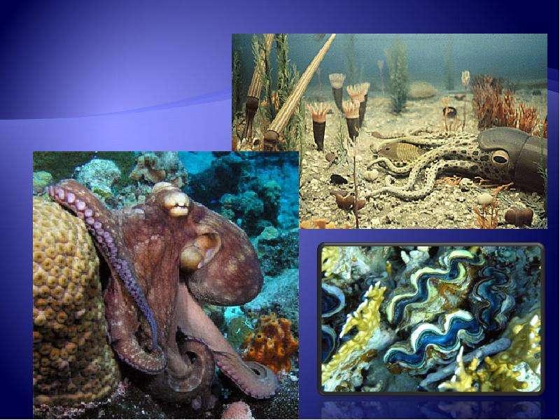 Развитие жизни на Земле: палеозой, слайд 10