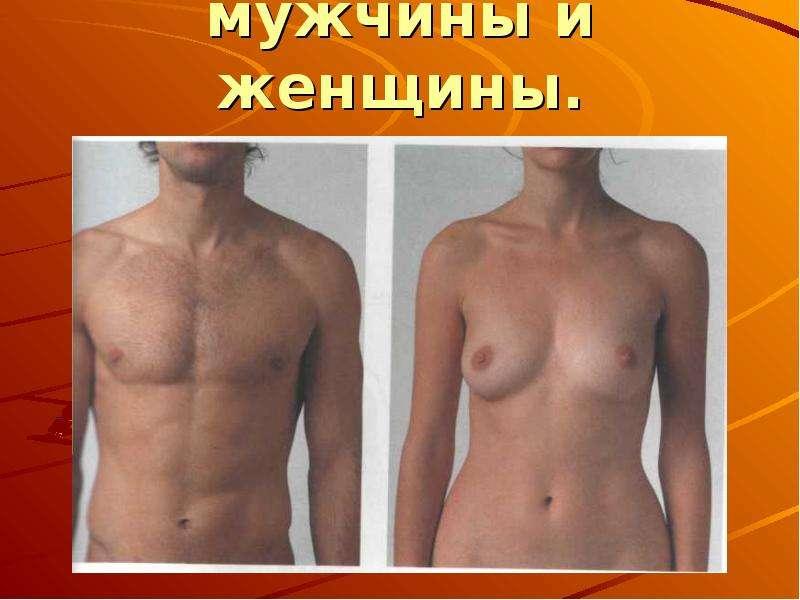 Отличия в строении скелета мужчины и женщины.