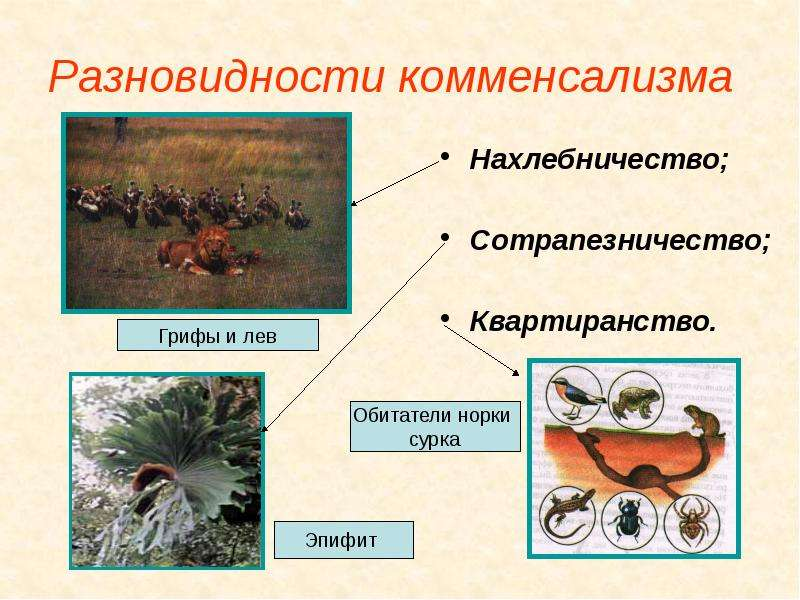 формы симбиоза и примеры таблица