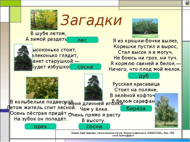 картинка загадка про лес домашних