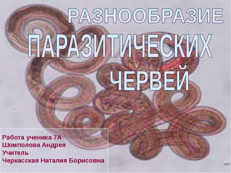 Разнообразие паразитических червей, слайд 2