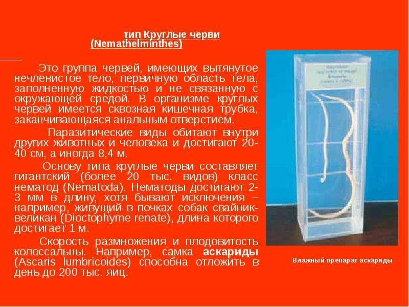тип Круглые черви (Nemathelminthes) Это группа червей, имеющих вытянутое нечленистое тело, первичную