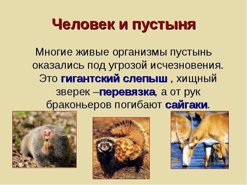 Человек и пустыня Многие живые организмы пустынь оказались под угрозой исчезновения. Это гигантский