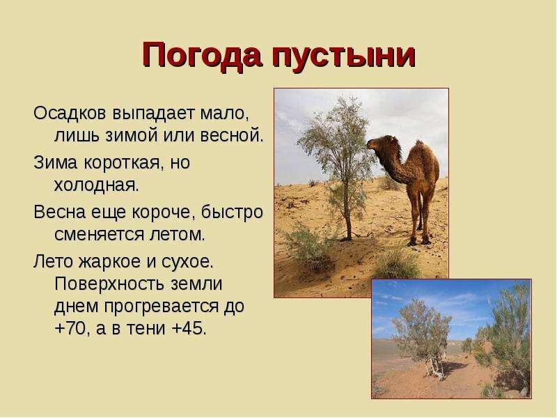 Погода пустыни Осадков выпадает мало, лишь зимой или весной. Зима короткая, но холодная. Весна еще к