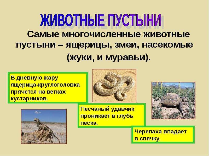 Самые многочисленные животные пустыни – ящерицы, змеи, насекомые (жуки, и муравьи).