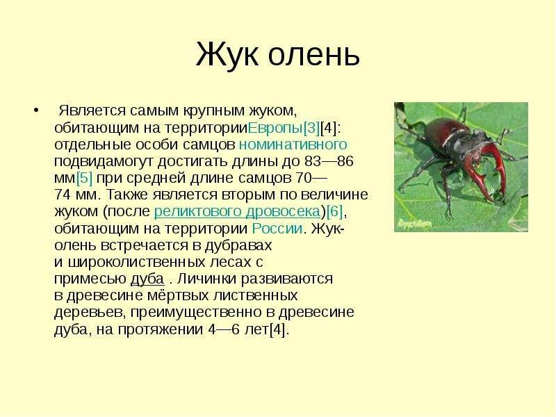 Жук олень Является самым крупным жуком, обитающим на территорииЕвропы[3][4]: отдельные особи самцов