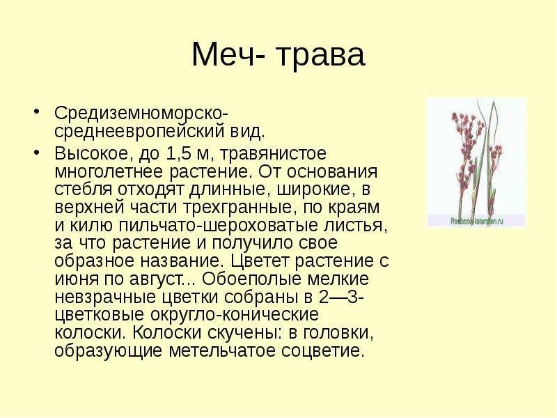 Меч- трава Средиземноморско-среднеевропейский вид. Высокое, до 1,5 м, травянистое многолетнее растен
