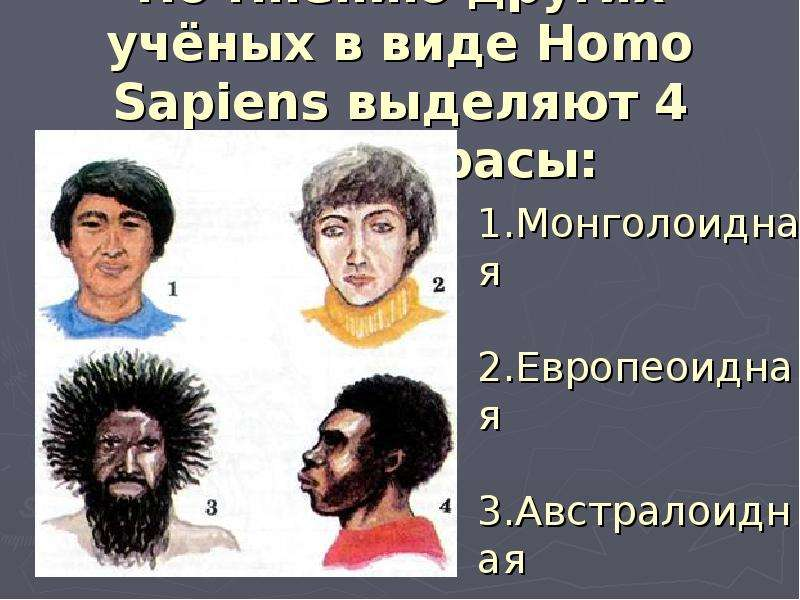 По мнению других учёных в виде Homo Sapiens выделяют 4 больше расы: