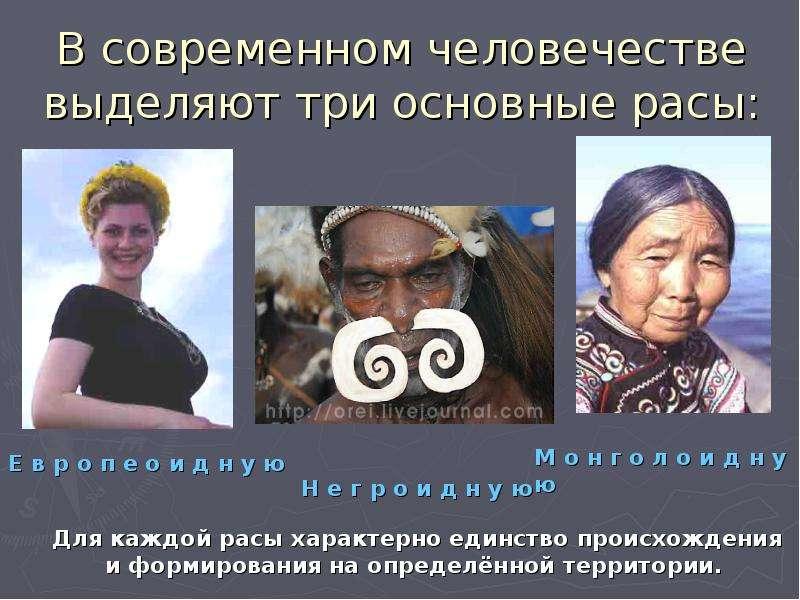 В современном человечестве выделяют три основные расы: