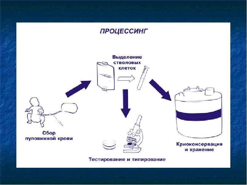 Сохранение стволовых клеток новорожденных детей для их будущей жизни, слайд 6