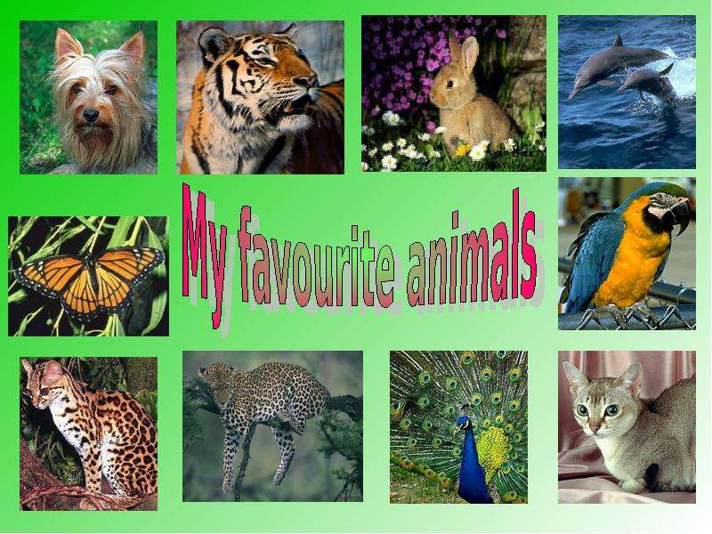 my favorite wild animal tiger essay Download and read my favorite animal tiger essay my favorite animal tiger essay no wonder you activities are, reading will be always needed it is not only to fulfil the duties that you need to finish.