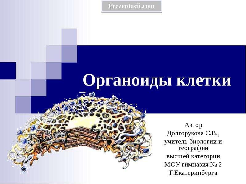 Презентация ОРГАНОИДЫ КЛЕТКИ