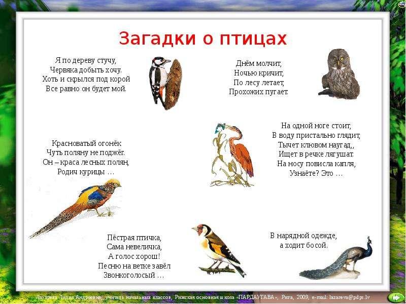 Картинки птиц с ответами