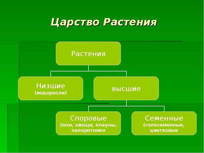 Классификация животного мира царства типы классы
