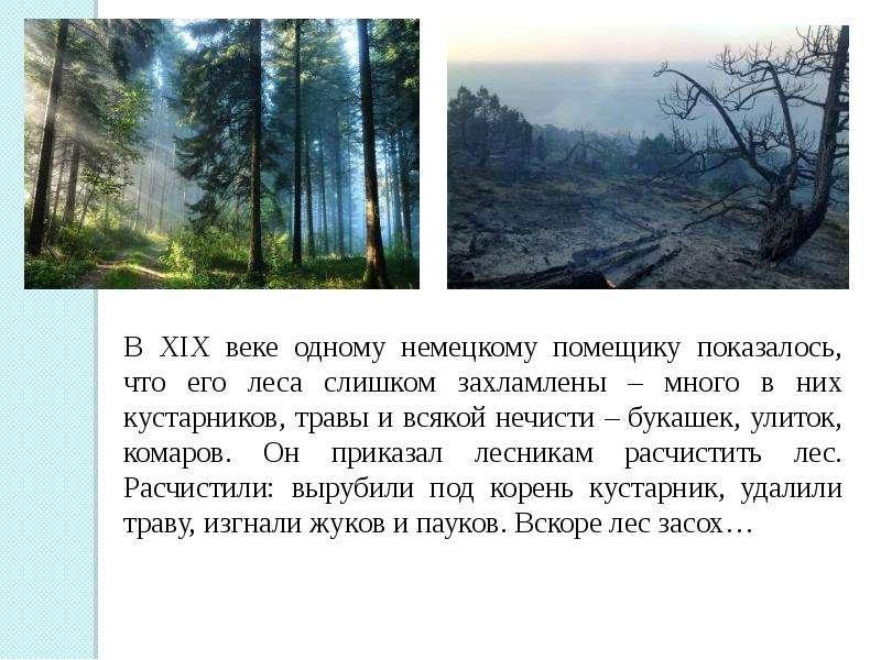 многих возникает сообщество леса 3 класс термобелье надевают детям