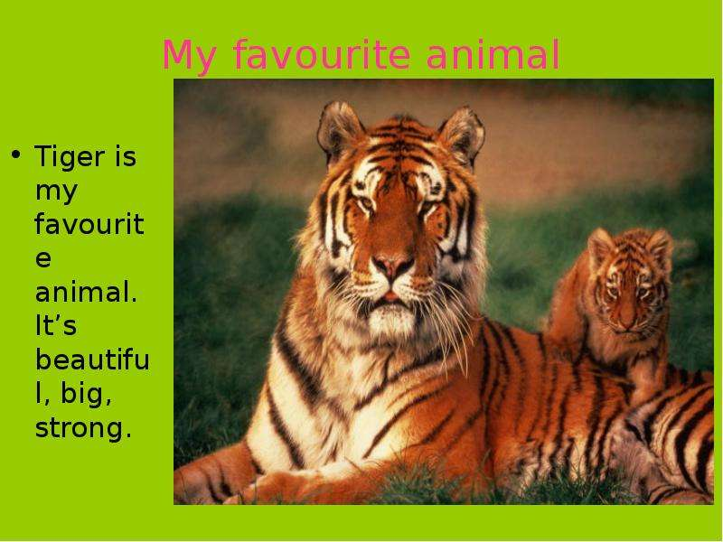essay on wild animal tiger