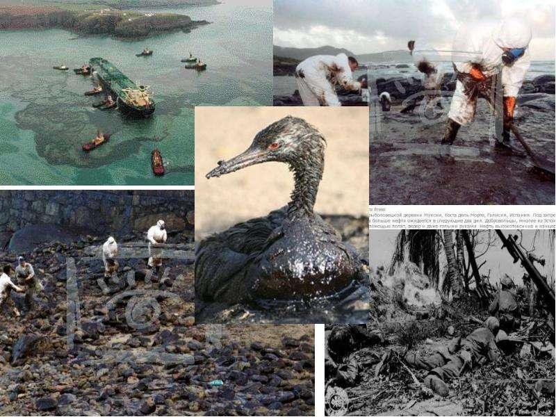 Антропогенное воздействие человека на окружающую среду, слайд 7