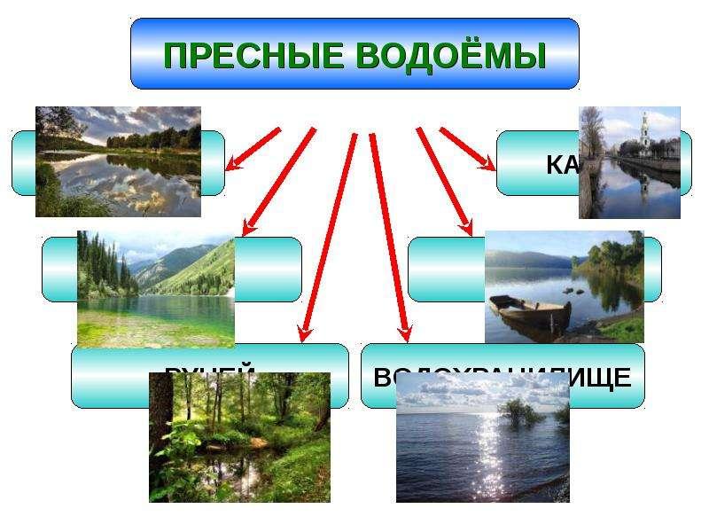 Значение пресных водоемов и их охрана, слайд 3