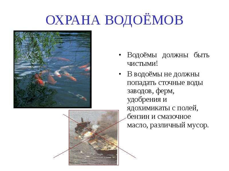 ОХРАНА ВОДОЁМОВ Водоёмы должны быть чистыми! В водоёмы не должны попадать сточные воды заводов, ферм