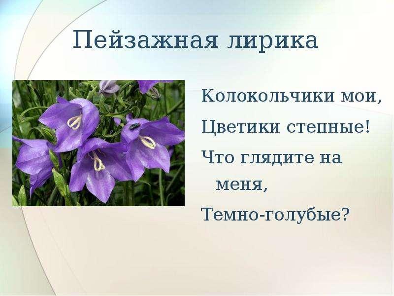 Пейзажная лирика Колокольчики мои, Цветики степные! Что глядите на меня, Темно-голубые?