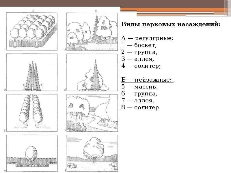 Приемы проектирования парковых насаждений, слайд 3