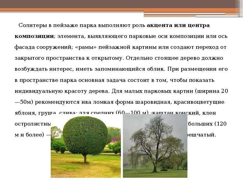 Солитеры в пейзаже парка выполняют роль акцента или центра композиции; элемента, выявляющего парковы