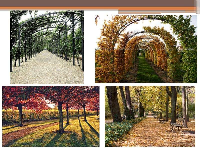 Приемы проектирования парковых насаждений, слайд 7