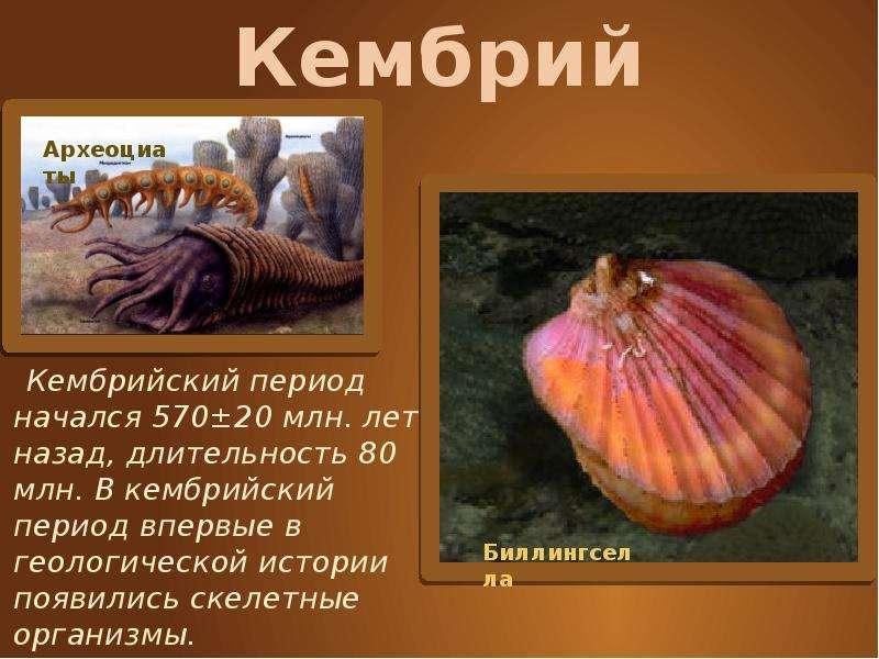 Кембрий Кембрийский период начался 570±20 млн. лет назад, длительность 80 млн. В кембрийский период